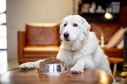 Pourquoi choisir des croquettes aux insectes pour chien ?