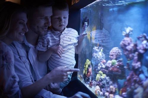 maintenance d'aquarium